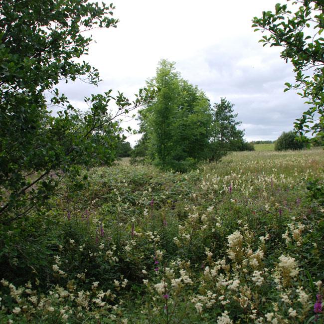 green sod ireland PaircATobair
